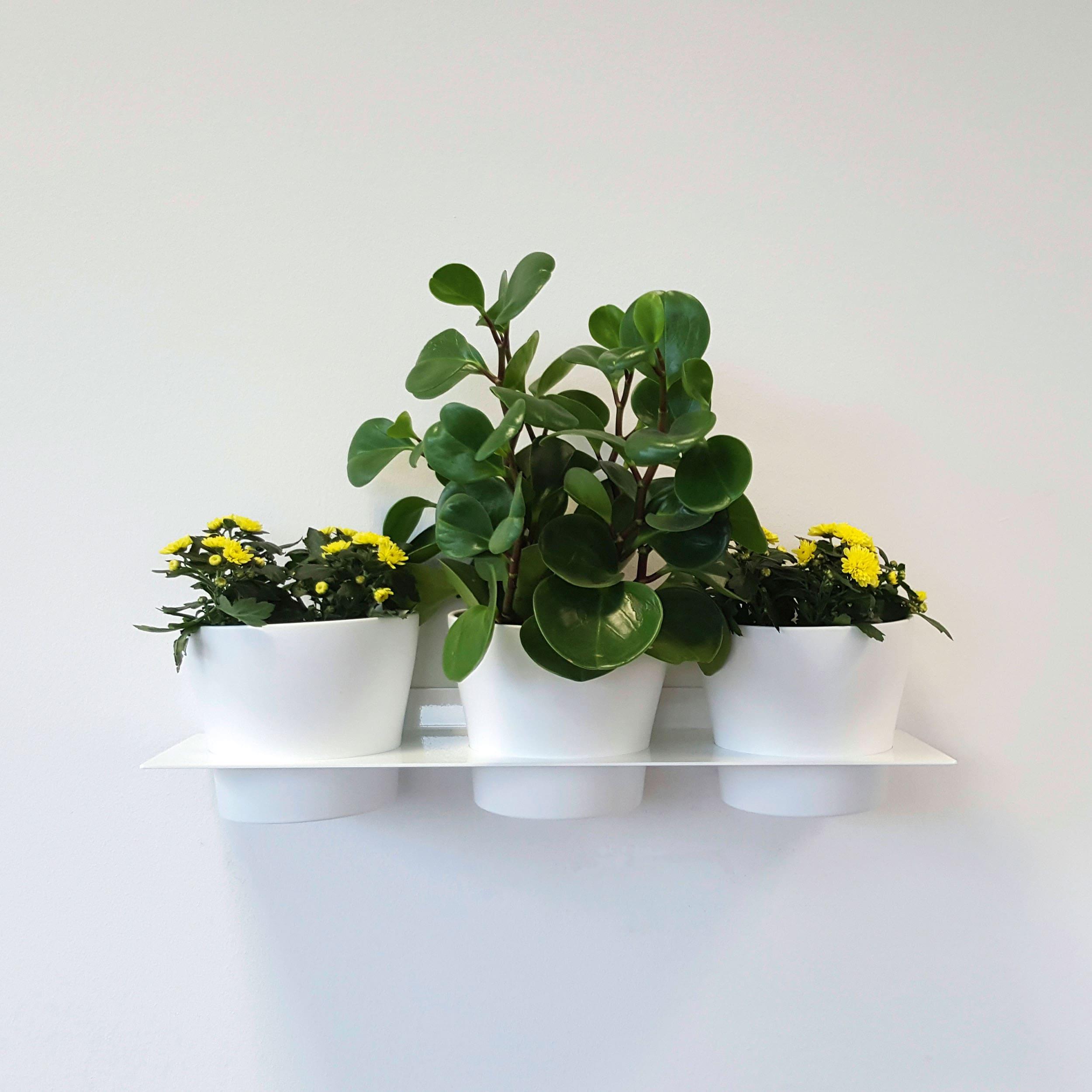 Flatrack Flowershelf Wandregal