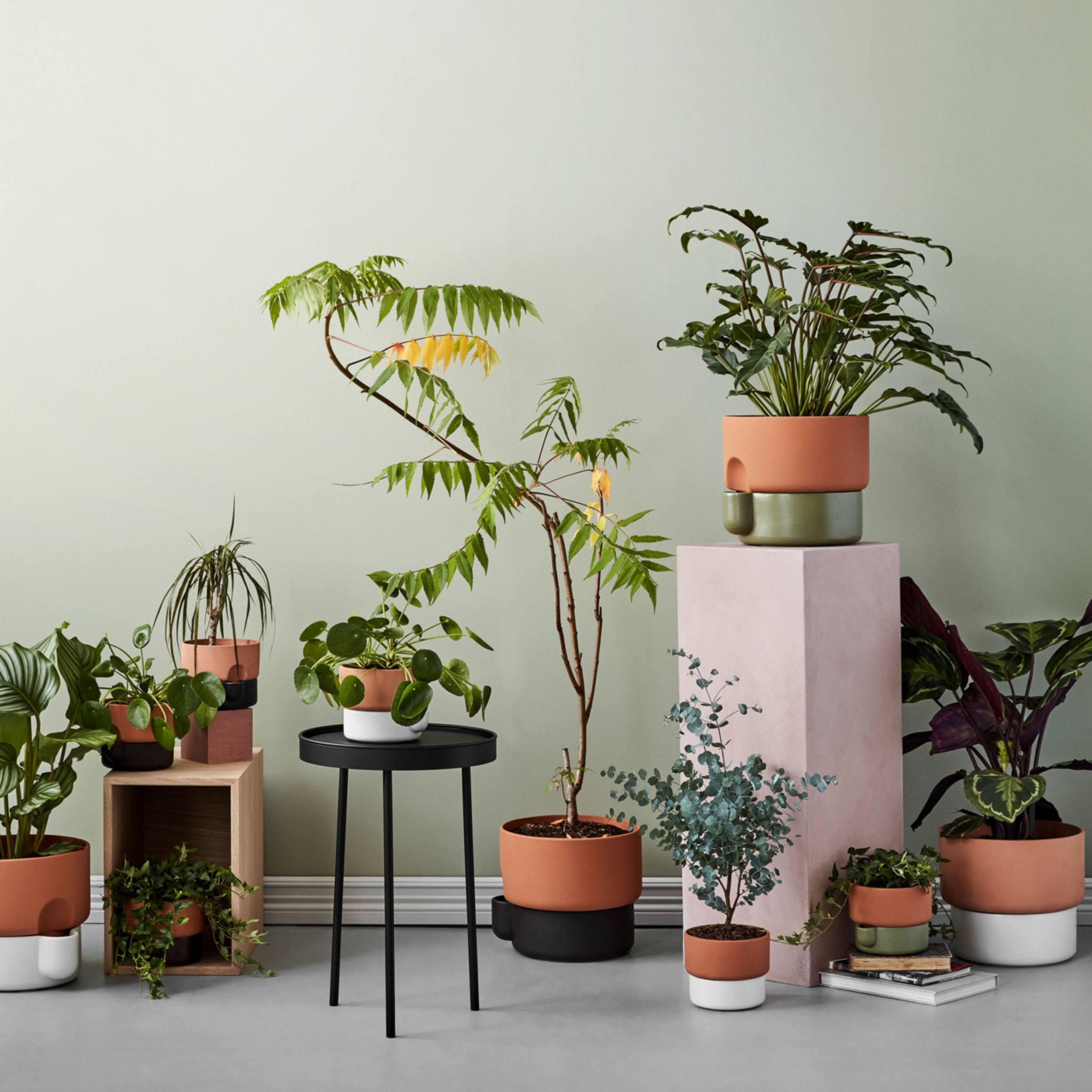 Oasis Blumentopf