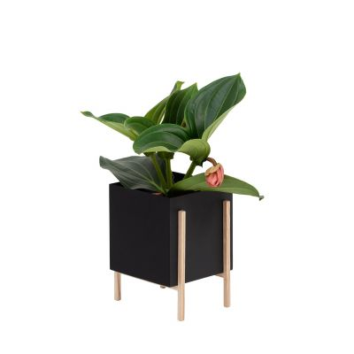 Botanic Pot Blumentopf